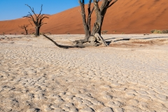 Old dead trees, Deadvlei, Namib-Naukluft National Park, Sesriem, Namibia